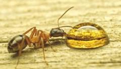 Что делать, если в квартире завелись муравьи?