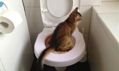 Легкий способ приучить котенка к лотку