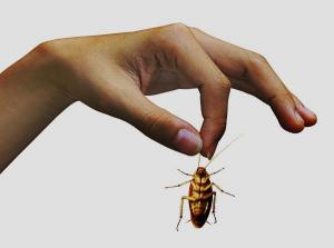 Обзор лучших средств от тараканов в квартире. Чем накормить нежданных гостей?
