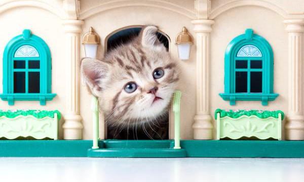 Метки в доме. Как вывести запах кошачьей мочи?