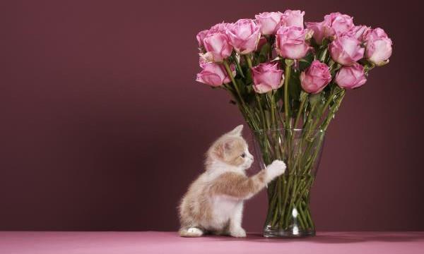 Советы и рецепты как сохранить цветы в вазе подольше