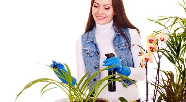 Избавляемся от паутинного клеща на комнатных растениях: средства и методы
